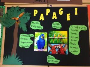 Plakat Papagei